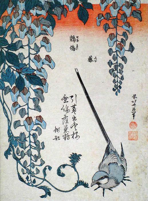 中版花鳥図 鶺鴒と藤(葛飾北斎の画)