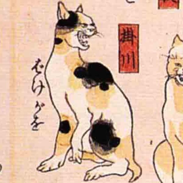 掛川/其のまま地口 猫飼好五十三疋(歌川国芳 画)の拡大画像