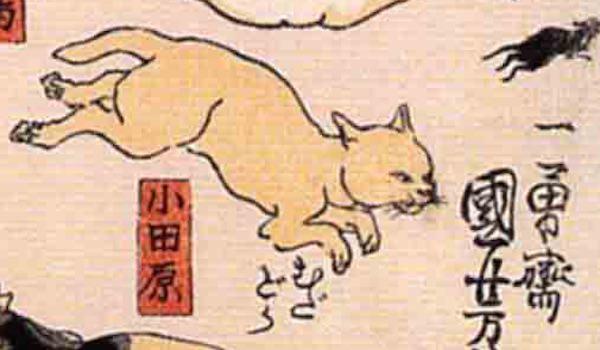 小田原/其のまま地口 猫飼好五十三疋(歌川国芳 画)の拡大画像