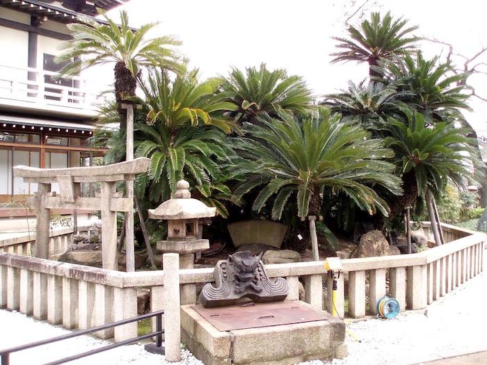 妙国寺の大蘇鉄