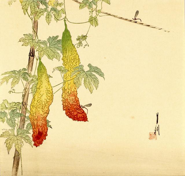 『苦瓜と糸蜻蛉』(尾形月耕 画)